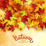 Autumn card, colorful leaves and handwritten lettering, background, template, illustration Stock Images