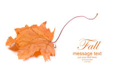 Autumn card Stock Image