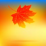 Autumn card with falling leaf and soft lights Royalty Free Stock Photo