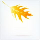 Autumn card with falling leaf on white background Royalty Free Stock Photo