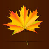 Autumn card. Royalty Free Stock Photo