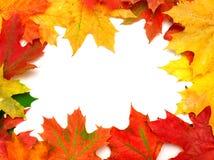 Autumn card Royalty Free Stock Image