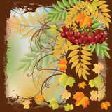 Autumn card with red rowan berry and maple leaves Stock Images