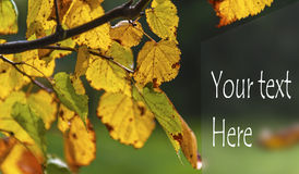 Autumn card Royalty Free Stock Photography