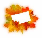 Autumn card on white. Royalty Free Stock Photos