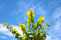 Autumn Caress Stock Photography