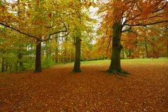 Autumn park with beech trees. Autumn,Carlsbad, Dalovice park with beech trees in October, Czech Republic stock images