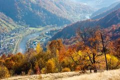 Autumn Carpathian mountain, Rakhiv, Ukraine. Autumn Carpathian Mountains landscape with multicolored yellow-orange-red-brown trees on slope and Rakhiv town and royalty free stock images