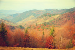 Autumn in Carpathian Mountains. Royalty Free Stock Photo