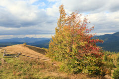 Autumn Carpathian mountainside. Stock Photos