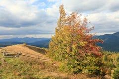 Autumn Carpathian mountainside. Stock Photos