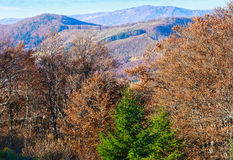 Autumn Carpathian view. Royalty Free Stock Photo