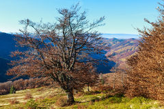 Autumn Carpathian view. Royalty Free Stock Photos