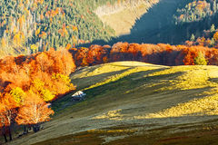 Autumn in Carpathians. Autumn landscape in Carpathian mountains Stock Photo