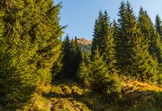 Autumn in the Carpathians stock photos
