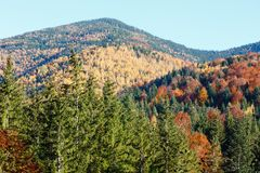 Autumn Carpathians Ukraine Royalty-vrije Stock Fotografie