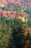 Autumn Carpathians Ukraine Stock Afbeeldingen