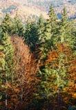 Autumn Carpathians Ukraine Stock Foto's