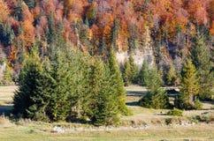Autumn Carpathians Ukraine Royalty-vrije Stock Afbeelding