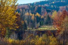 Autumn Carpathians Ukraine Royaltyfri Foto