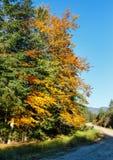 Autumn Carpathians-weg de Oekraïne Royalty-vrije Stock Foto