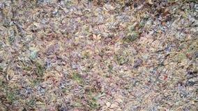 Autumn Carpet Imagen de archivo