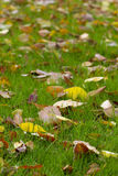 Autumn carpet. Autumn leafs in the green grass landscape fragment background Stock Photography