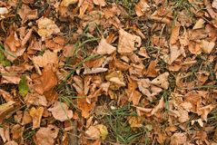Autumn carpet Stock Photo