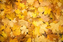 Autumn carpet Royalty Free Stock Photography