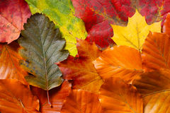 Autumn carpet Royalty Free Stock Images
