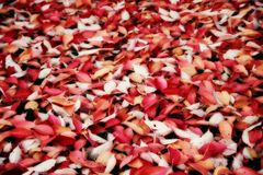 Autumn Carpet Stock Image