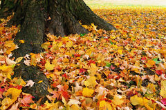 Autumn carpet Royalty Free Stock Photos