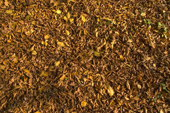Autumn carpet Royalty Free Stock Image