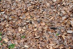 Autumn Carpet Images stock