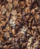 Autumn Carpet Photo stock