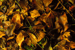 Autumn Carpet Imagem de Stock Royalty Free