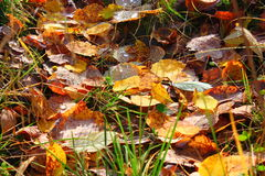 Autumn Carpet Stockbilder