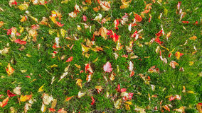 Autumn Carpet Immagine Stock