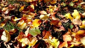Autumn Carpet Imagenes de archivo