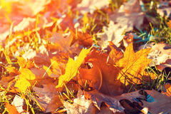 Autumn Carpet Fotografía de archivo