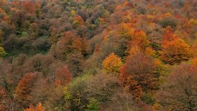 Autumn Carpet Imágenes de archivo libres de regalías