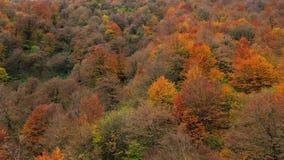 Autumn Carpet Royalty-vrije Stock Afbeeldingen