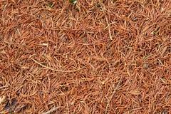 Autumn carpet Stock Photo
