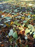Autumn carpet of yellow leaves Royalty Free Stock Photography