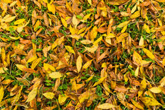 Autumn carpet of yellow and orange leaves on a green grass Stock Photos