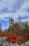 Autumn Carso Near Aurisina Immagine Stock Libera da Diritti