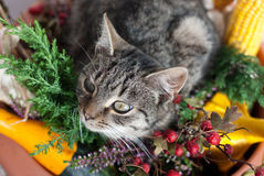 Autumn cat Royalty Free Stock Image