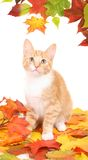 Autumn cat Stock Photo