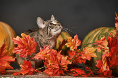 Autumn cat Stock Photos