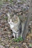 Autumn cat portrait Stock Image